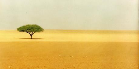 Μήνυμα του ΙΚΙ, με αφορμή την παγκόσμια ημέρα για την καταπολέμηση της ερημοποίησης